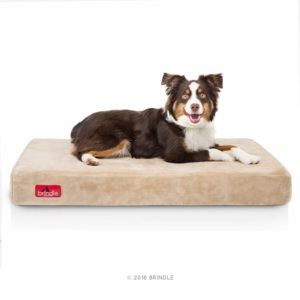 Orthopedic dogs beds are such a big help for a dog with arthritis