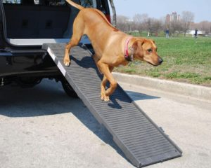 petstep folding dog ramps