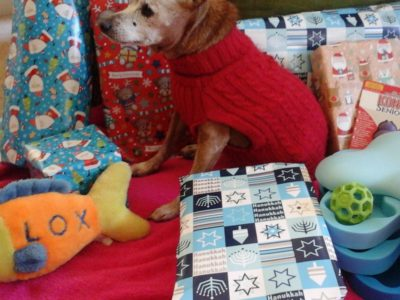 Reds list of the best holiday gifts for dogs