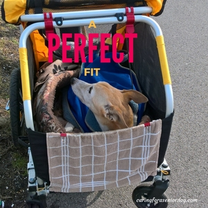 tips for picking the perfect pet stroller