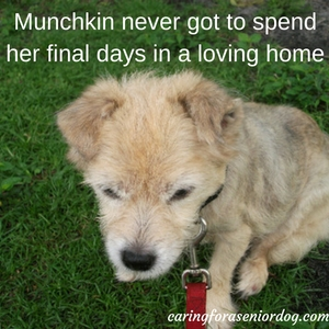 so many reasons why you should adopt an old dog