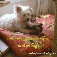 how I taught Saffy to use a dog ramp