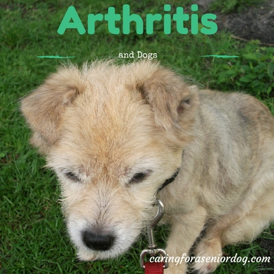 arthritis and dogs