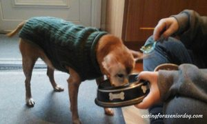 elevating-bowls-for-arthritic-dogs