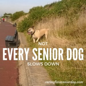nutritional needs of senior dogs