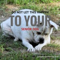 the importance of proper senior dog nutrition