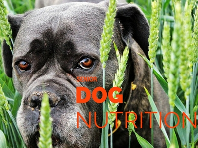 senior dog nutrition