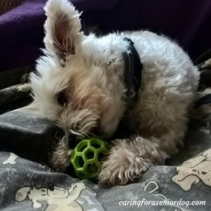 the importance of mental stimulation for dogs