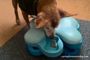 the importance of mental stimulation when caring for a senior dog