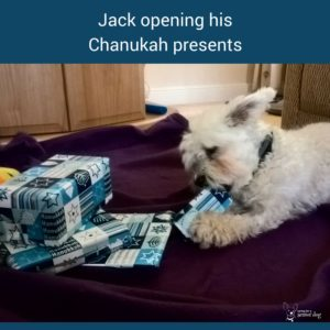 Chanukah dog safety tips