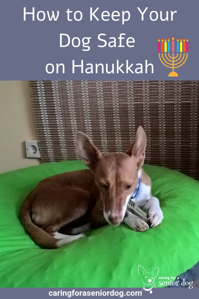 How to Keep Your Dog Safe on Hanukkah