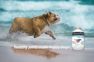 best vets glycan plus glucosamine