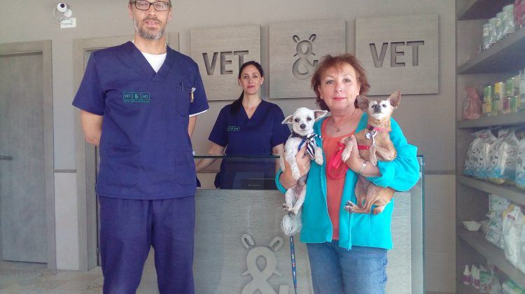 how to find a great vet to help you care for your senior dog