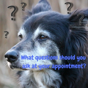 Questions to ask about hospice care for dogs