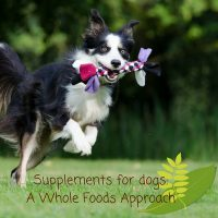 Supplements for dogs a whole foods approach