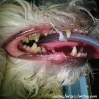 dog dental care