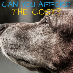 can you afford the cost of holistic care for dogs