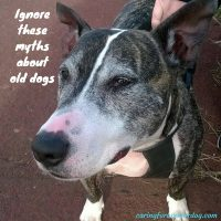 ignore these myths about old dogs