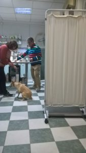 a one vet practice in a one room clinic in Spain