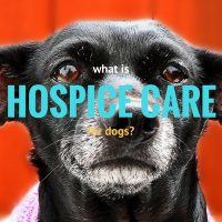 what is hospice care for dogs2