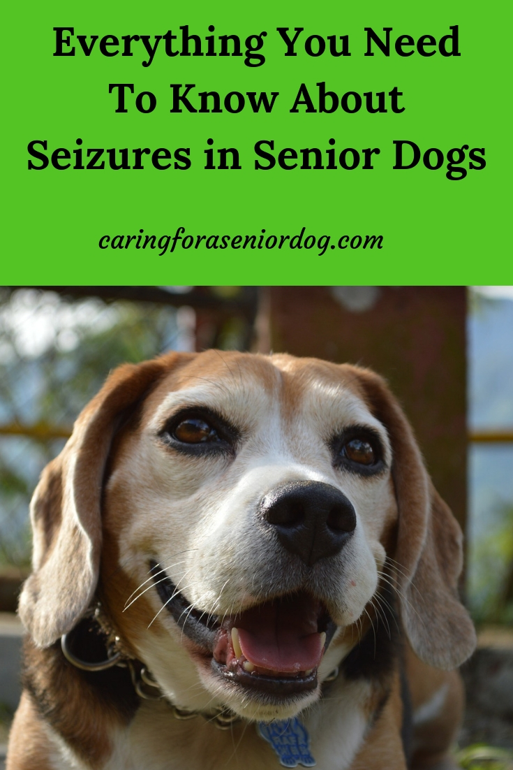 Everything you need to know about seizures in senior dogs