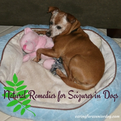 Natural Remedies for Seizures in Dogs