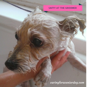 aging dogs need grooming too