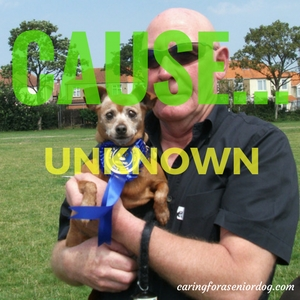 cause of seizure in dogs is not always known