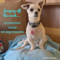 common dog injuries