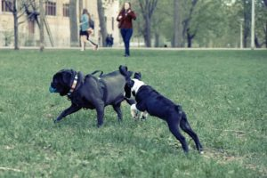 sprains are common dog injuries