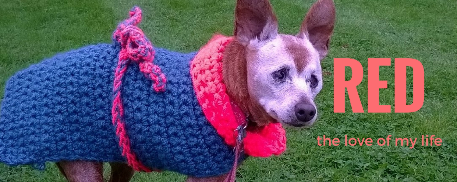 Caring For a Senior Dog