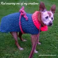how to care for your aging dog in the winter