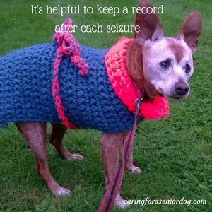 it's helpful to keep a record after each seizure in senior dogs