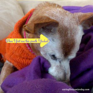 lumps and bumps in older dogs