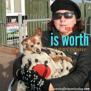saving money on vet bills
