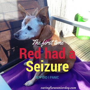 seizures and senior dogs