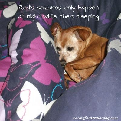 seizures in senior dogs
