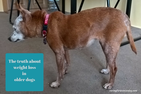 the truth about weight loss in older dogs