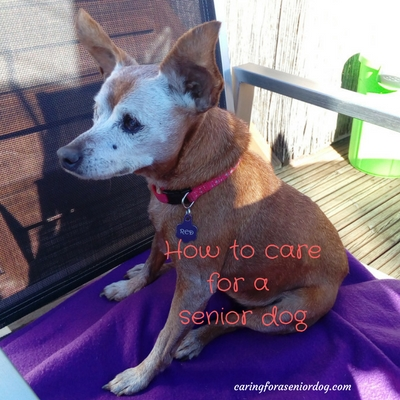 13 helpful tips on how to care for a senior dog