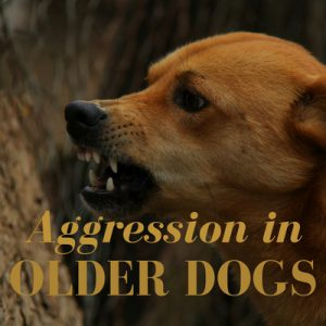 Aggression in older dogs
