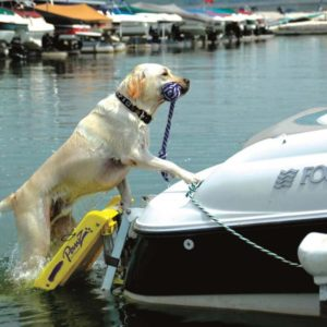 pet stairs for use on boats