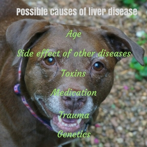 Possible causes of liver disease