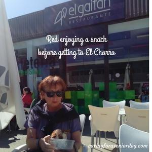 Red enjoying a snack before getting to El Chorro