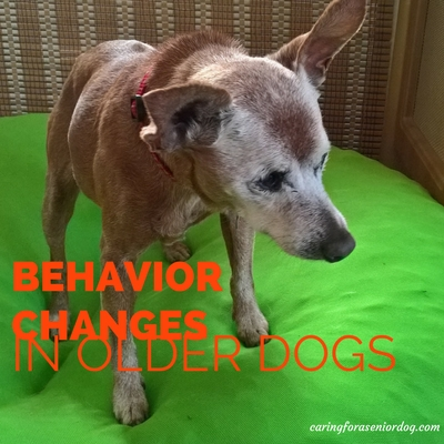 behavior changes in older dogs