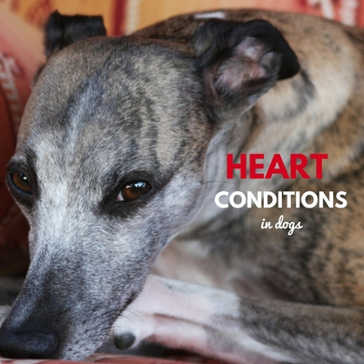 heart conditions in dogs