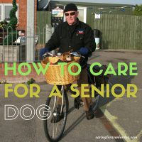 how to care for a senior dog