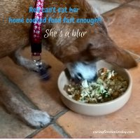 what to feed a senior dog