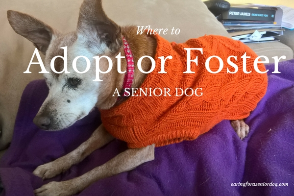where to adopt or foster a senior dog2