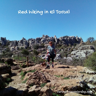 On a hike in El Torcal Antequera Spain with my senior dog Red