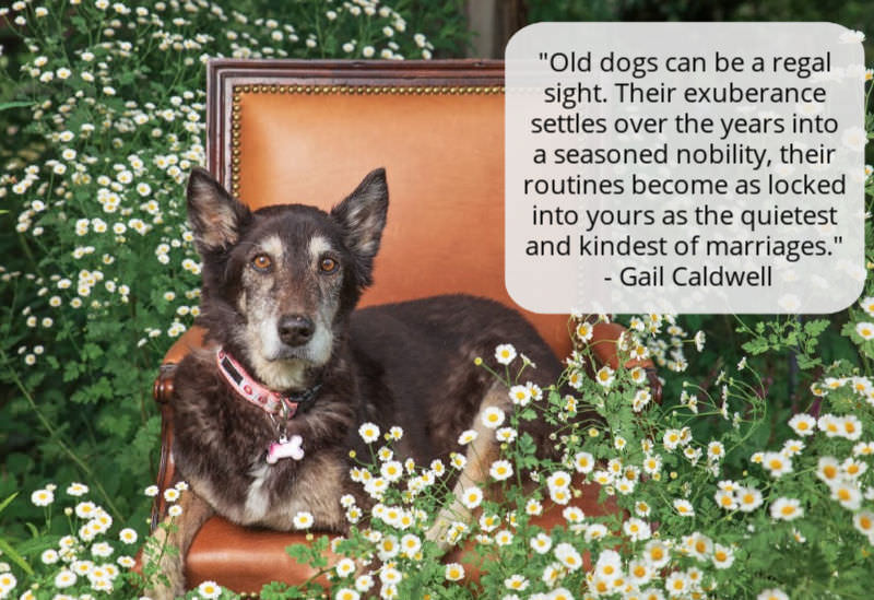 Senior Dog Quote - the relationship is like a marriage